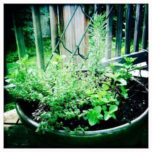 Ahhh, the herbs. Thyme, rosemary, spearmint, and a little oregano.